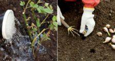 совместимость растений на грядке