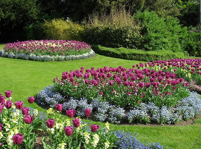 круглые клумбы с тюльпанами