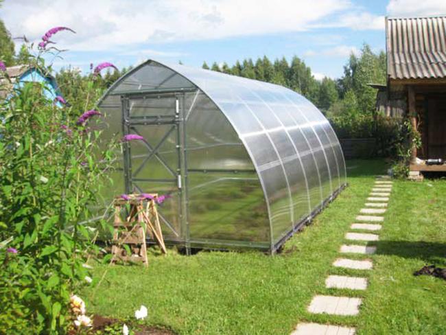 Что выращивать в теплице? Посадка и уход, как вырастить и собрать ранний урожай, а также когда сажать весной и зимой растения, схемы и фото-материалы