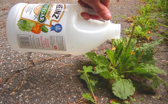 как избавиться от сорняков и травы