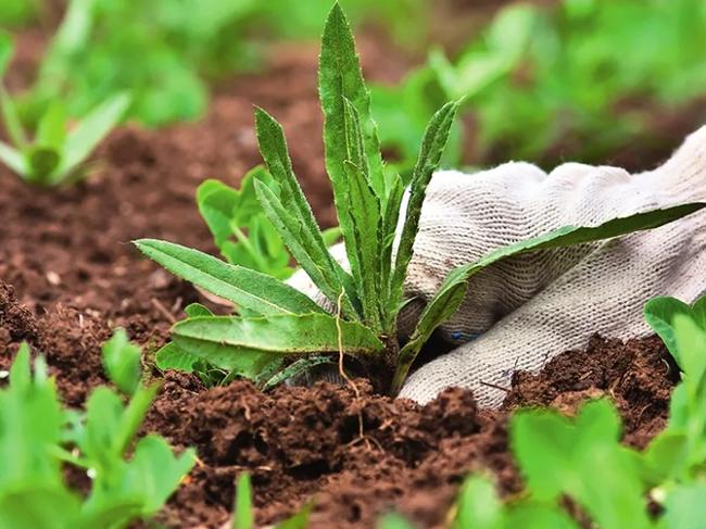 как избавиться от сорняков на даче навсегда