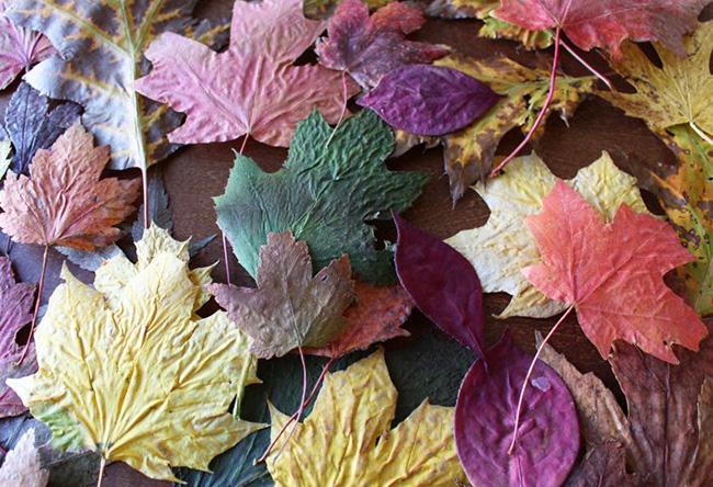 listiya-dlya-venka Гирлянды и венок из осенних листьев своими руками