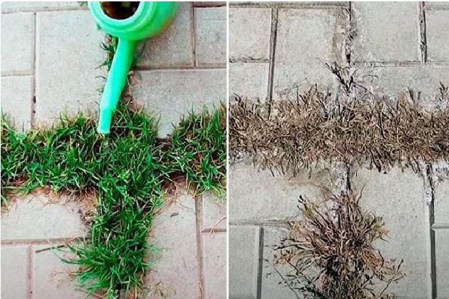 трава на стыках дорожки