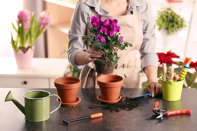 чем подкормить комнатные цветы