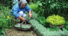 пряные травы на огороде
