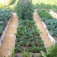 садовые дорожки из газет