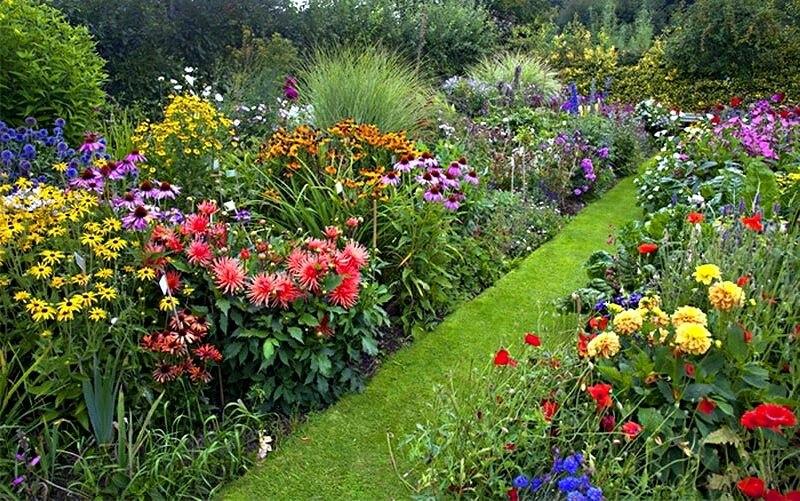 посадка георгин в саду