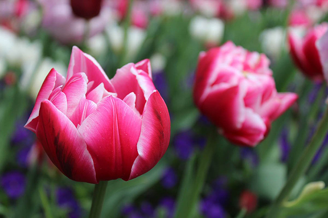 Выращивание красивых цветов в саду